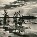 Polesie fragment jeziora