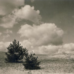 polesie wydma nadbużańska